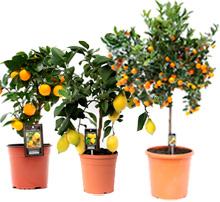 Растения с плодами