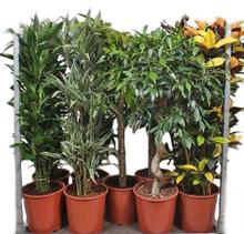 Высокі рослини, від 1метра