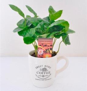 Кофе Арабика в чашке