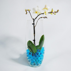 Орхидейка в вазе