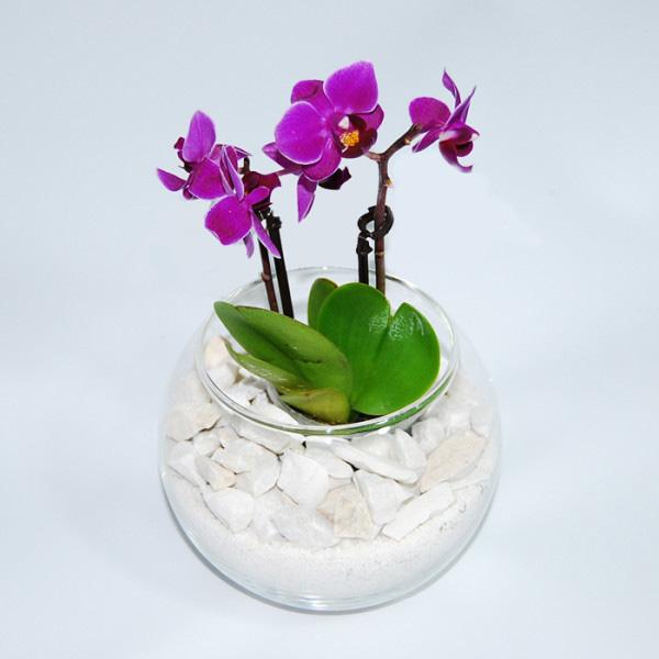 Орхидея в камнях