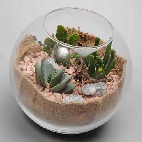 Флорариум с мини кактусами