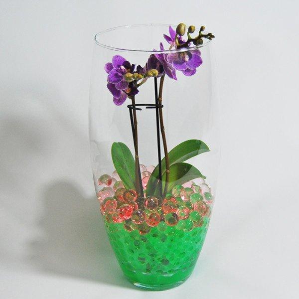 Мини орхидея в гидрогеле