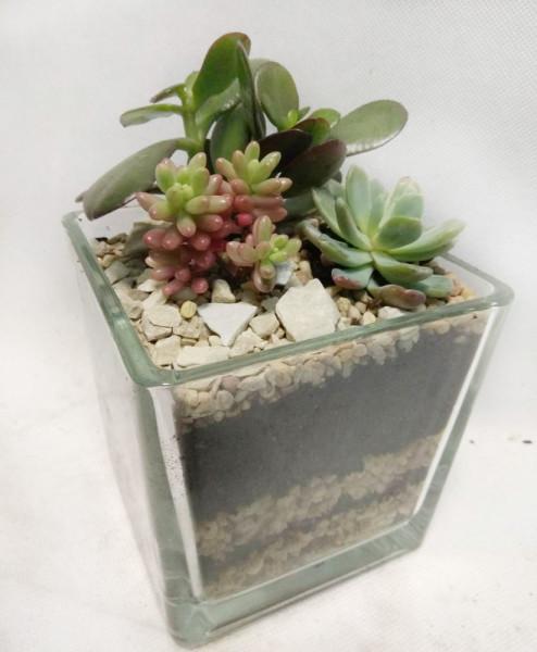 квадратный-флорариум