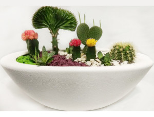 флорариум-Жизнь