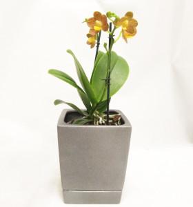 Композиция орхидея в горшке