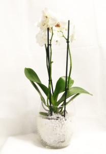 композиция орхидея в стекле с гидрогелем