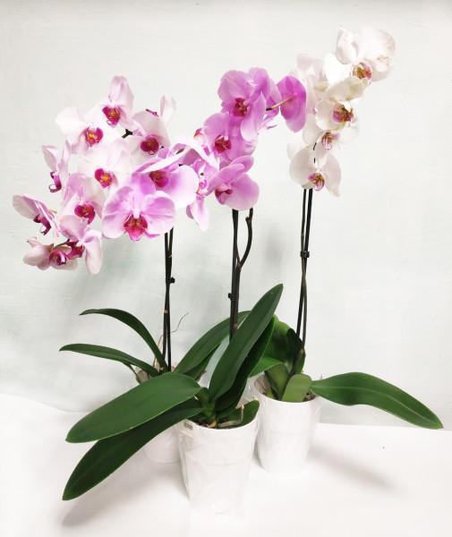 Акция орхидей