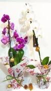 Орхидеи на подарок