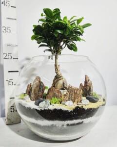 Флорариум бонсай