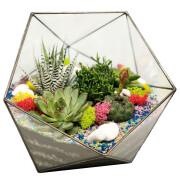 Многоугольный-флорариум