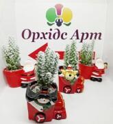 Рождественская композиция Орхидс Арт